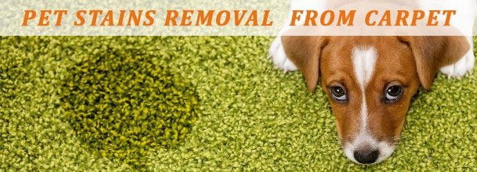 Pet Stains Removal From Carpet