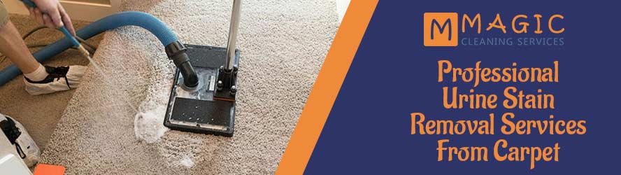Professional Urine Stain Removal Service From Carpet