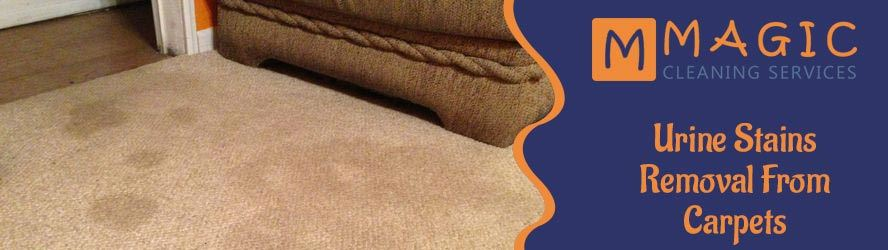 Urine Stains Removal From Carpets