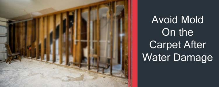 AVOID MOLD ON THE CARPET AFTER WATER DAMAGE